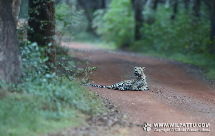 Maradanmaduwa Male 2-MMMC 2 - 19th February 2016 at 5.59pm