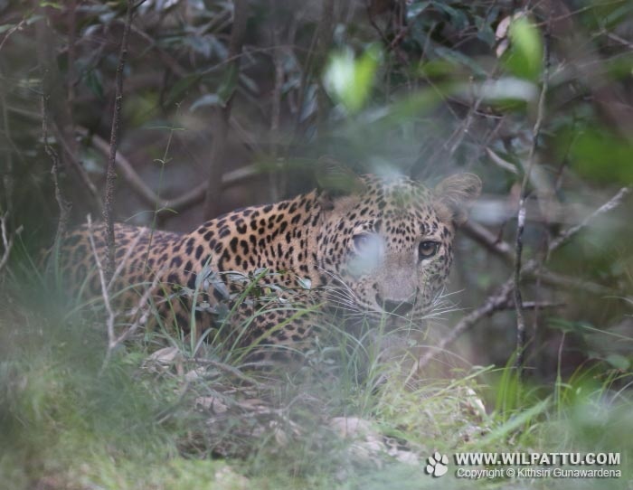 Maradanmaduwa Male 2-MMMC 2 - 20th February 2016 at 8.52am