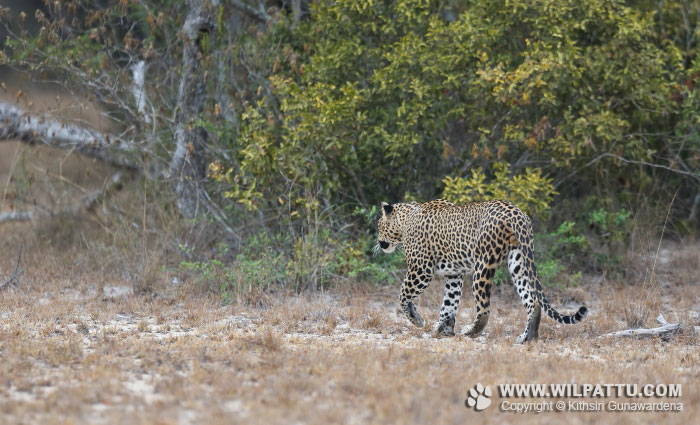 Maradanmaduwa Male 2-MMMC 2 - 16th October 2016 at 6.35am