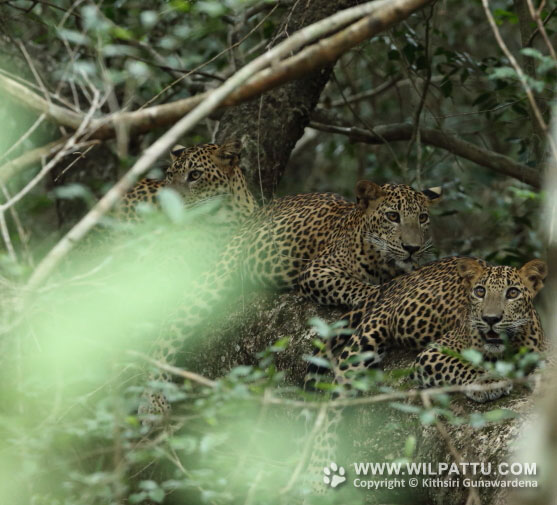 Maradanmaduwa Male 2-MMMC 2 - 19th September 2015 at 9.35am