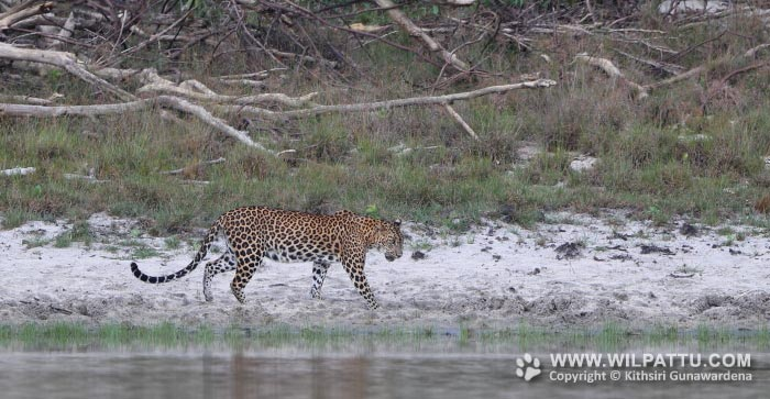 Manikrala Uraniya Female 1-MRUF 1 - 28th November 2020 at 11.55am