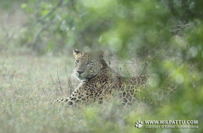Nelum Wila Male 2-NWMC 2 - 26th October 2015 at 9.14am