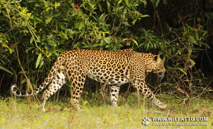 Nelum Wila Male 2-NWMC 2 - 30th January 2016 at 11.52am