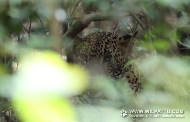 Percy Bendi Wewa Male 2-PBWMC 2 - 28th October 2018 at 8.42am